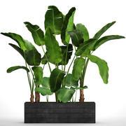 Zestaw drzew bananowych 3d model
