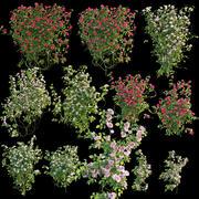 Krzewy róż 3d model