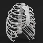 Anatomi insan göğüs kafesi 3d model