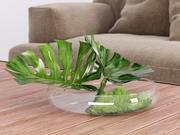 Philodendron Dianthus Vessel 3d model