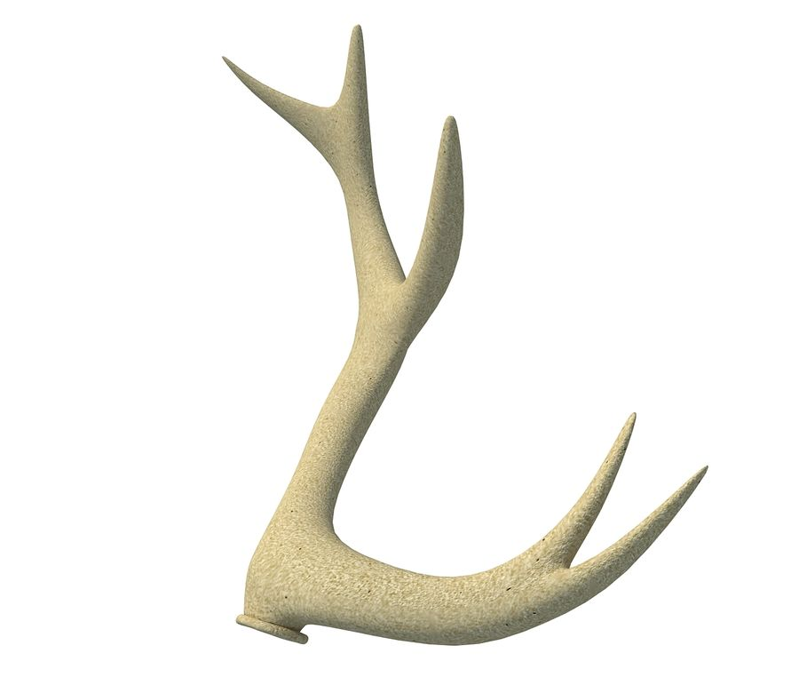 Deer Antler royalty-free 3d model - Preview no. 3