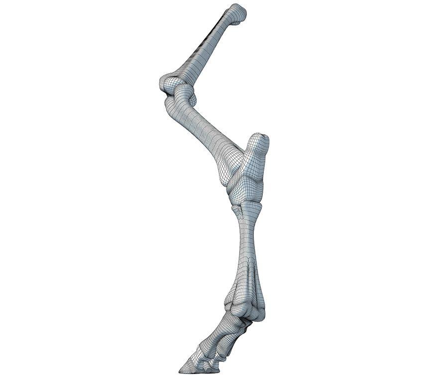 Animal Leg Bones V4 royalty-free 3d model - Preview no. 8