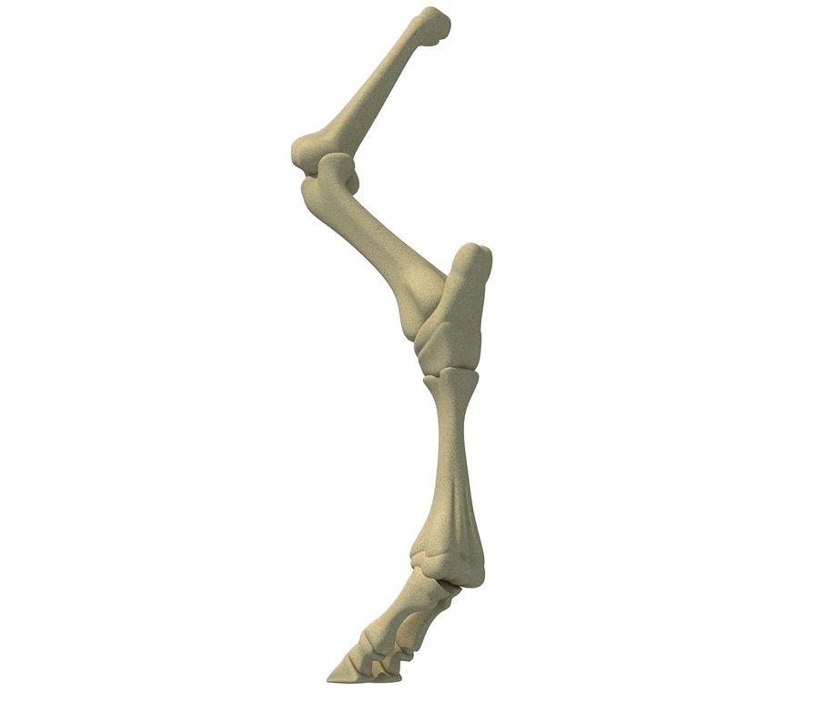 Animal Leg Bones V4 royalty-free 3d model - Preview no. 2