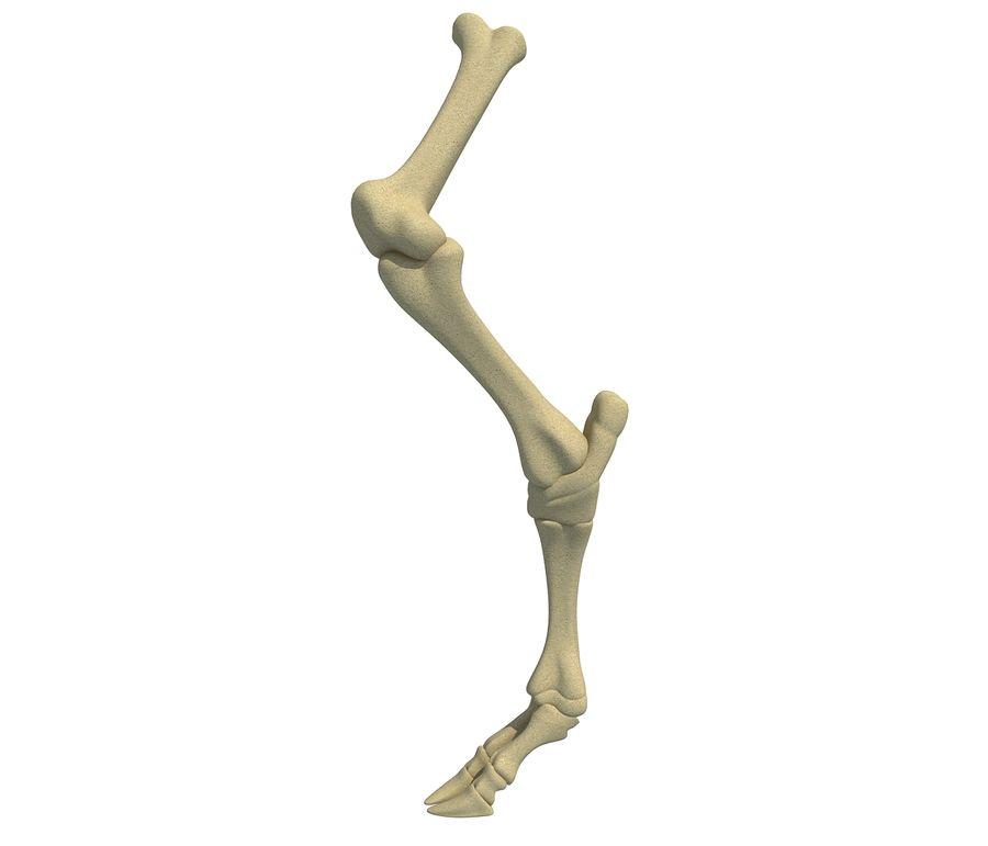 Animal Leg Bones V4 royalty-free 3d model - Preview no. 1
