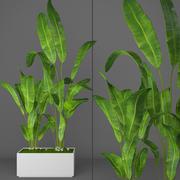 Palma bananowa 3d model