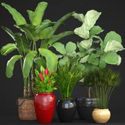Collection plants(1) 3d model