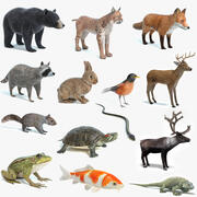 Collezione di animali 3d model