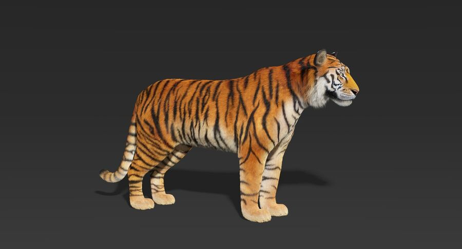 Tigre (pele) royalty-free 3d model - Preview no. 3