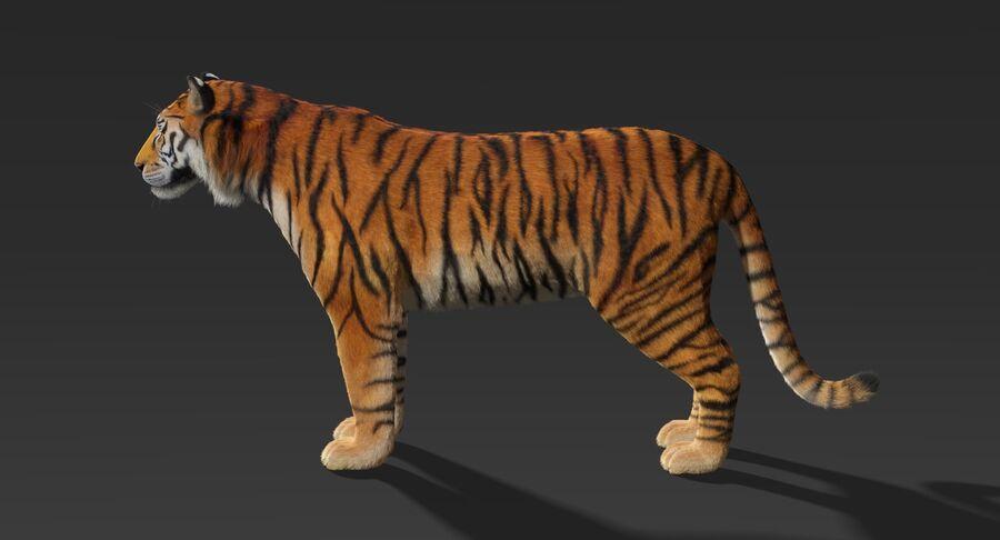 Tigre (pele) royalty-free 3d model - Preview no. 6