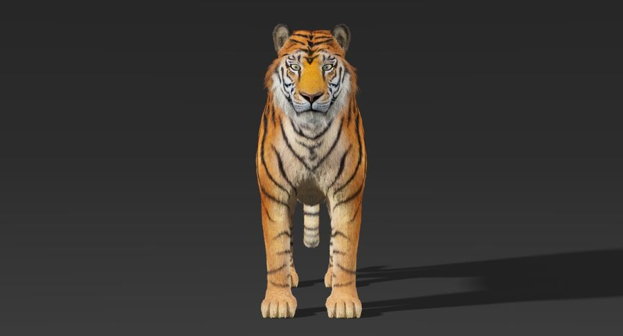 Tigre (pele) royalty-free 3d model - Preview no. 9
