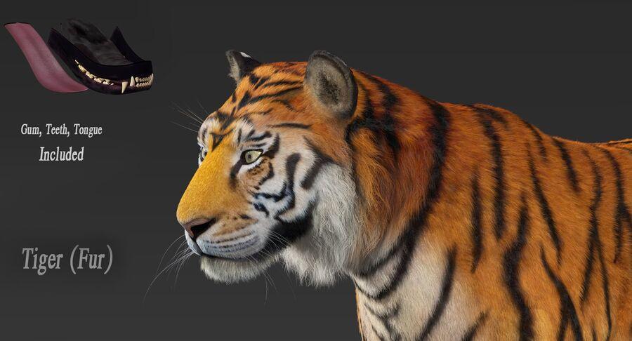 Tigre (pele) royalty-free 3d model - Preview no. 10