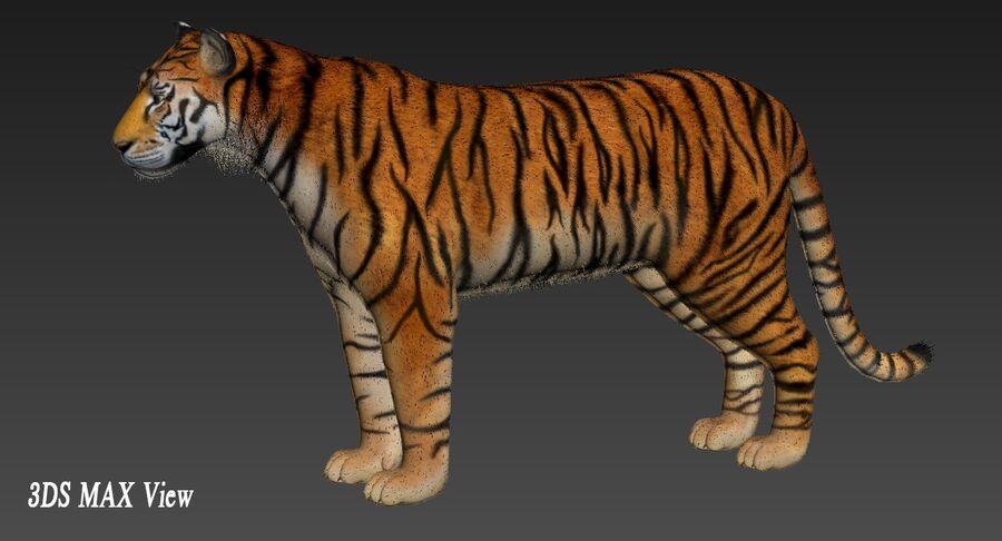 Tigre (pele) royalty-free 3d model - Preview no. 15