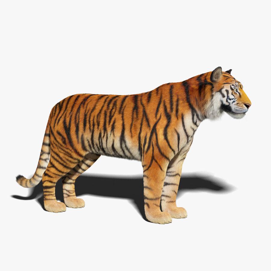 Tigre (pele) royalty-free 3d model - Preview no. 1