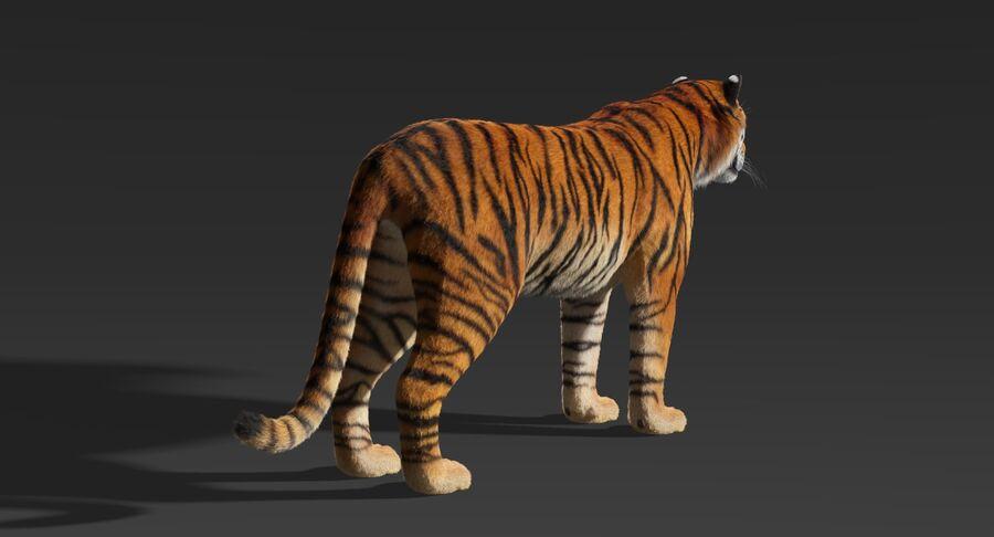 Tigre (pele) royalty-free 3d model - Preview no. 5