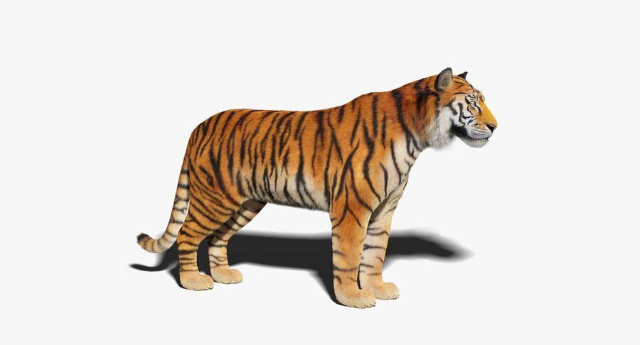 Tigre (pele) royalty-free 3d model - Preview no. 2