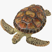 Sea Turtle Stemcell 3d model