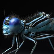 Dragonfly per Cinema 4d 3d model