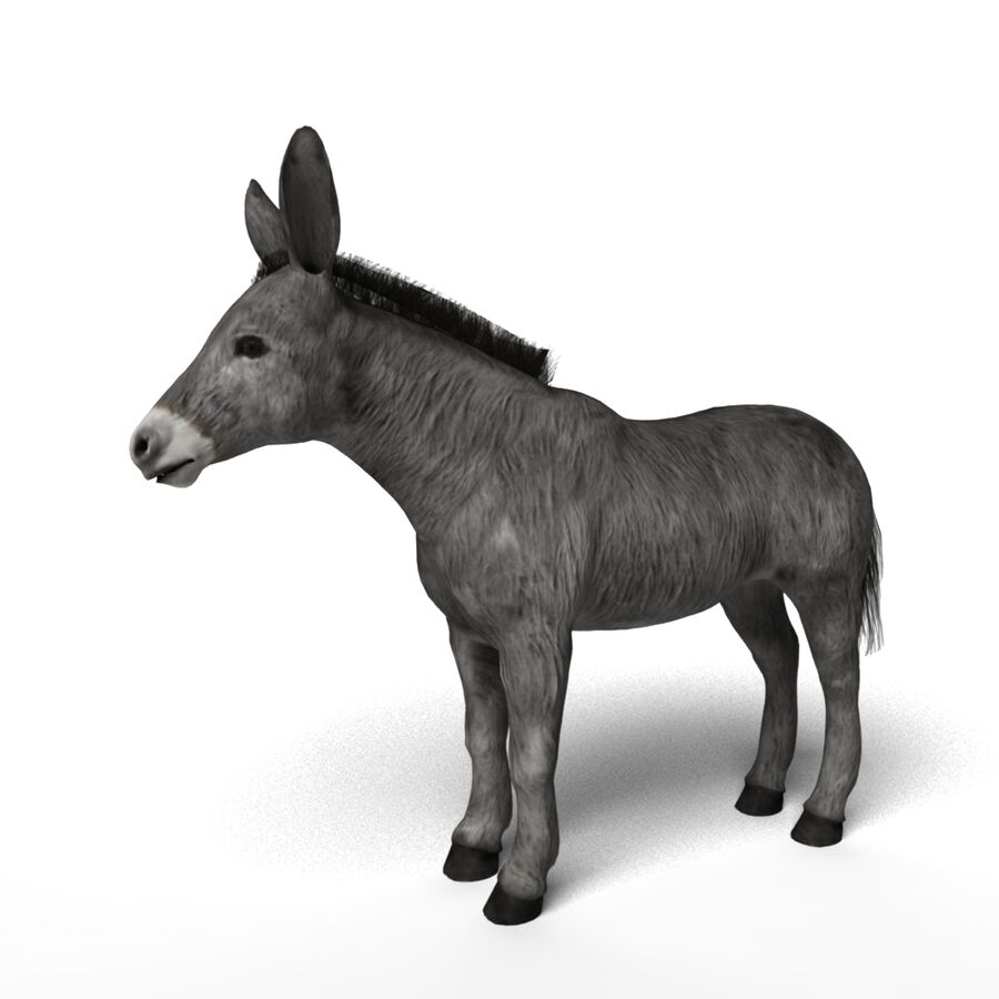 Zwierząt royalty-free 3d model - Preview no. 4