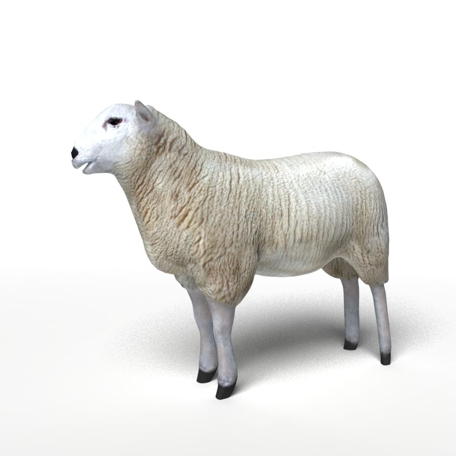 Animals royalty-free 3d model - Preview no. 12