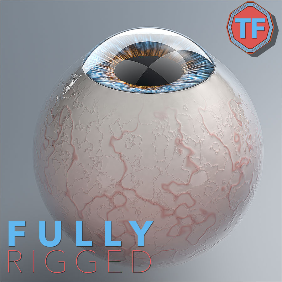 Realist Human Eye - With Rig royalty-free 3d model - Preview no. 1