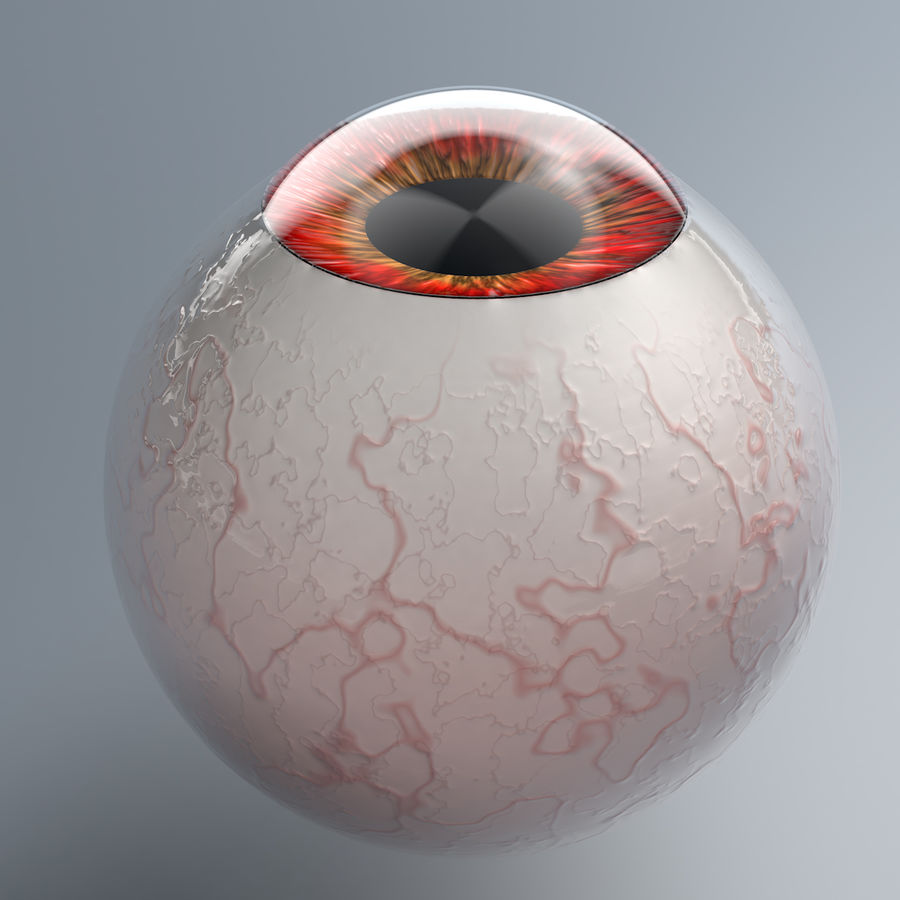 Realist Human Eye - With Rig royalty-free 3d model - Preview no. 6
