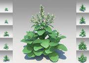 Nicotiana Rustica (10 items) 3d model