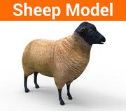 owca low poly model 3d model