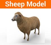får låg polymodell 3d model