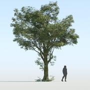 Generic Tree v2 3d model