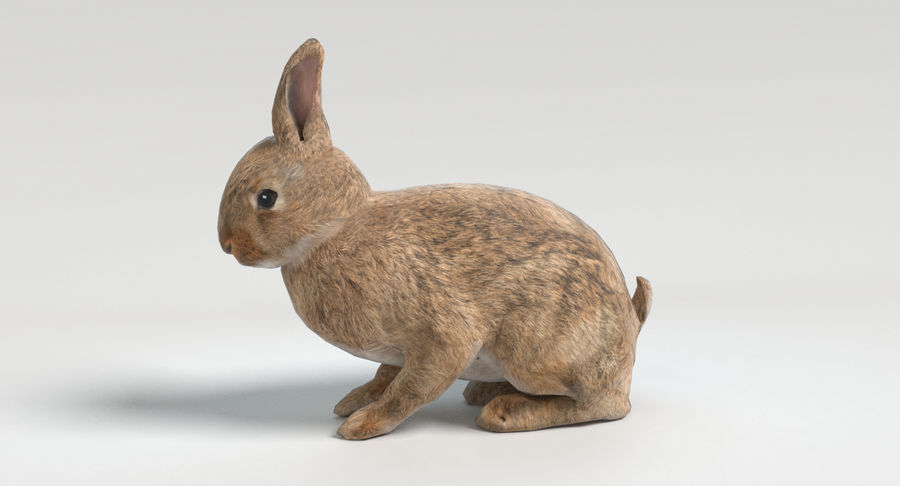 Animated Game Rabbit royalty-free 3d model - Preview no. 7