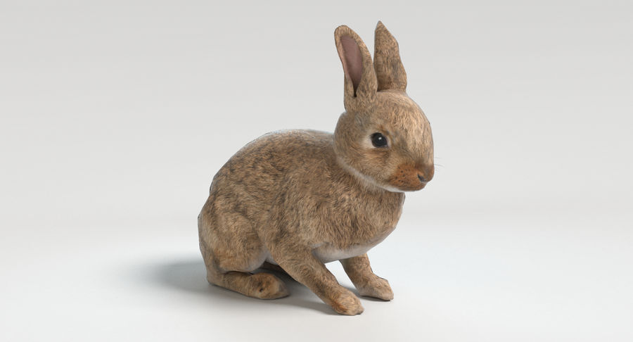 Animated Game Rabbit royalty-free 3d model - Preview no. 9