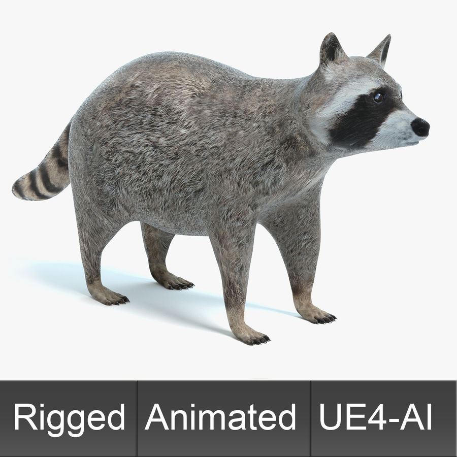 Animated Game Raccoon 3D Model $49 -  upk  obj  fbx  dae  blend  3ds