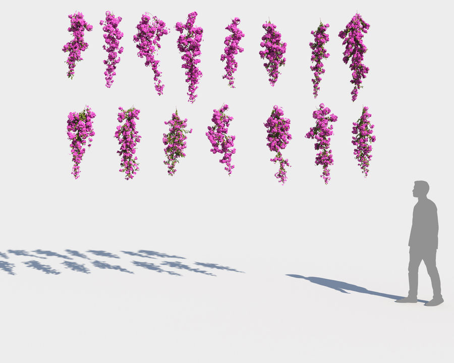 Climbing Bougainvillea Collection 2 (+GrowFX) royalty-free 3d model - Preview no. 5