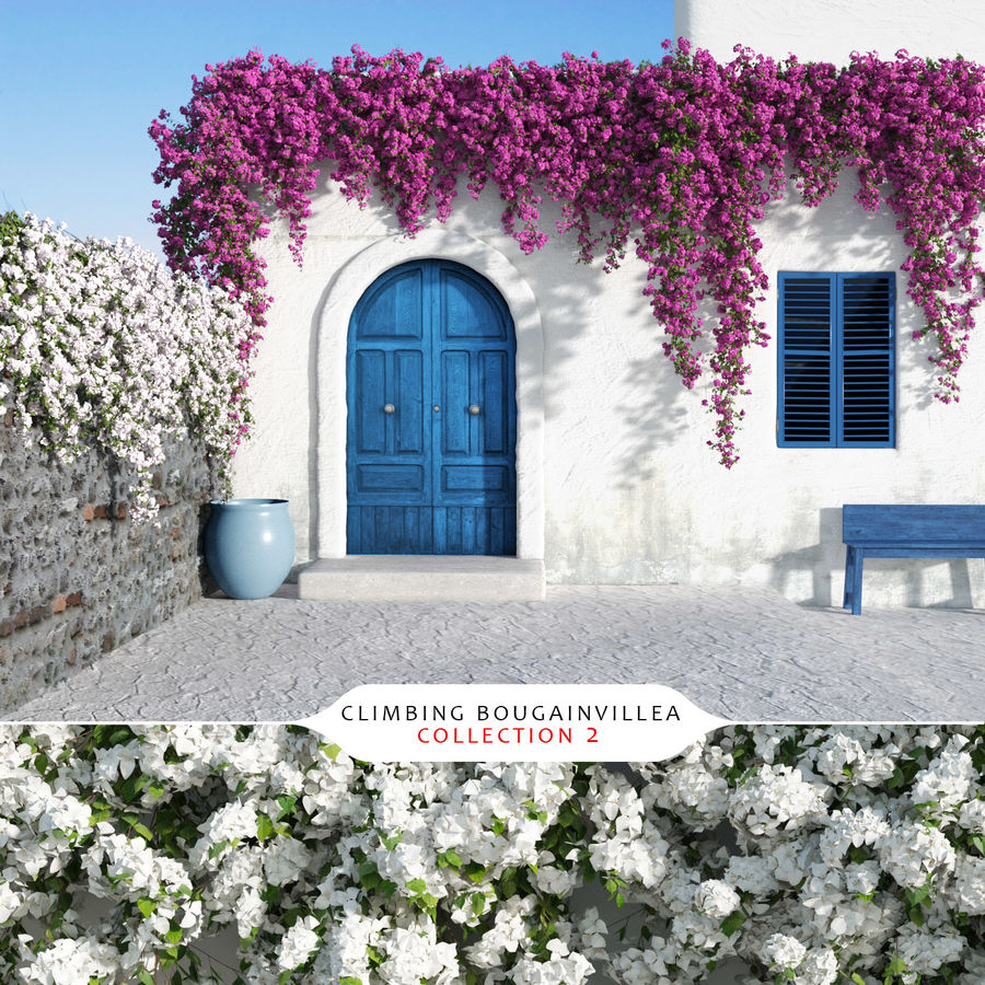 Climbing Bougainvillea Collection 2 (+GrowFX) royalty-free 3d model - Preview no. 1