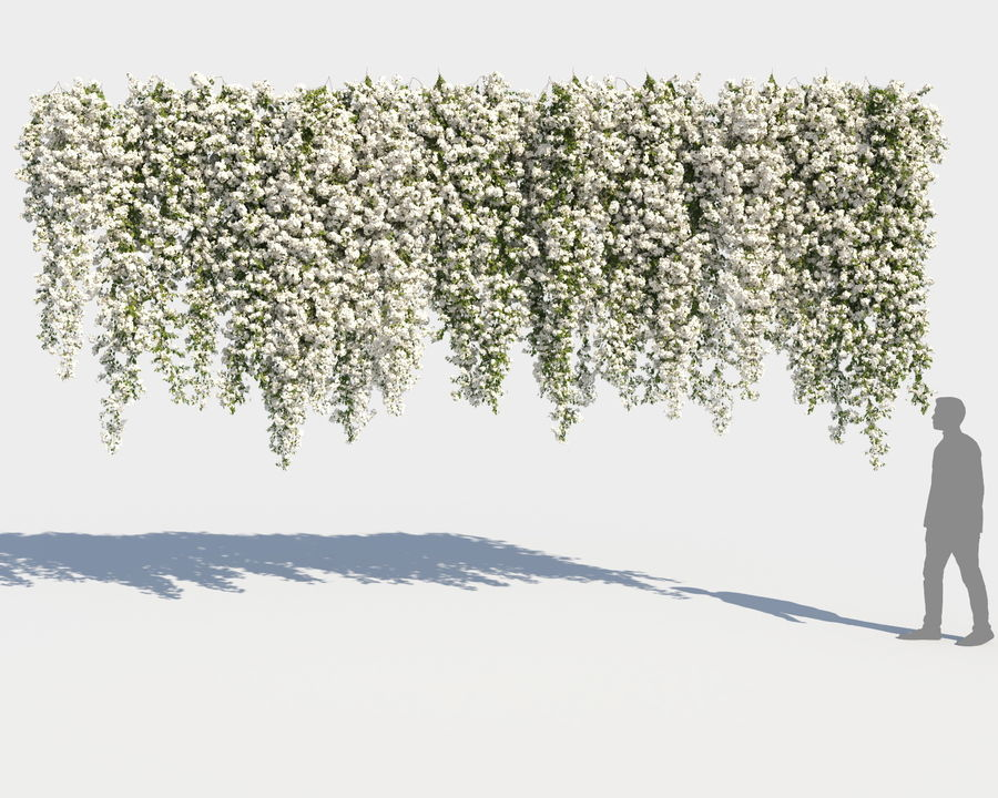 Climbing Bougainvillea Collection 2 (+GrowFX) royalty-free 3d model - Preview no. 11