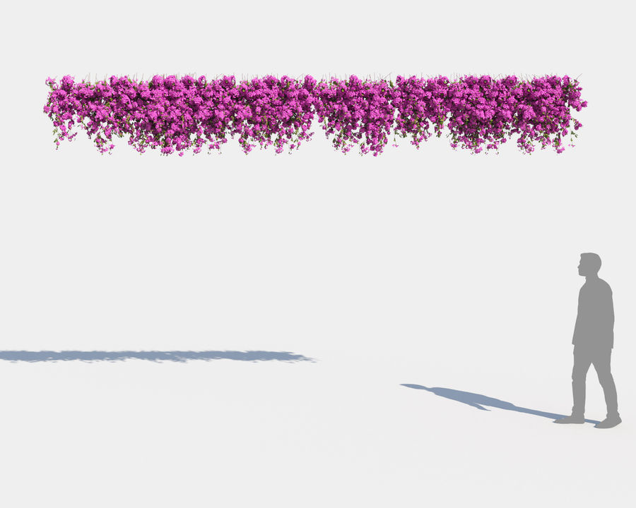 Climbing Bougainvillea Collection 2 (+GrowFX) royalty-free 3d model - Preview no. 4