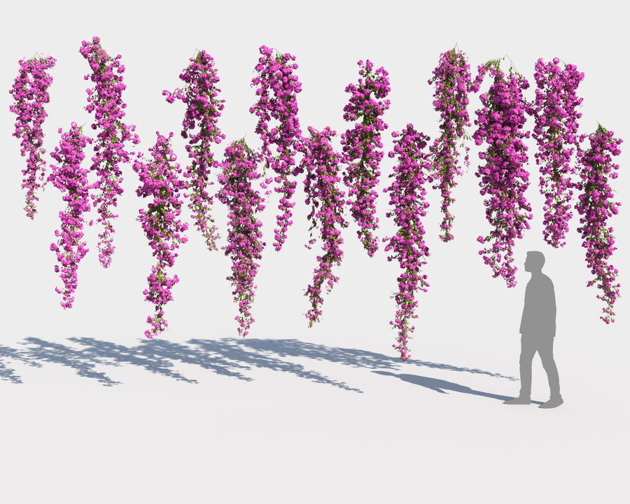 Climbing Bougainvillea Collection 2 (+GrowFX) royalty-free 3d model - Preview no. 9
