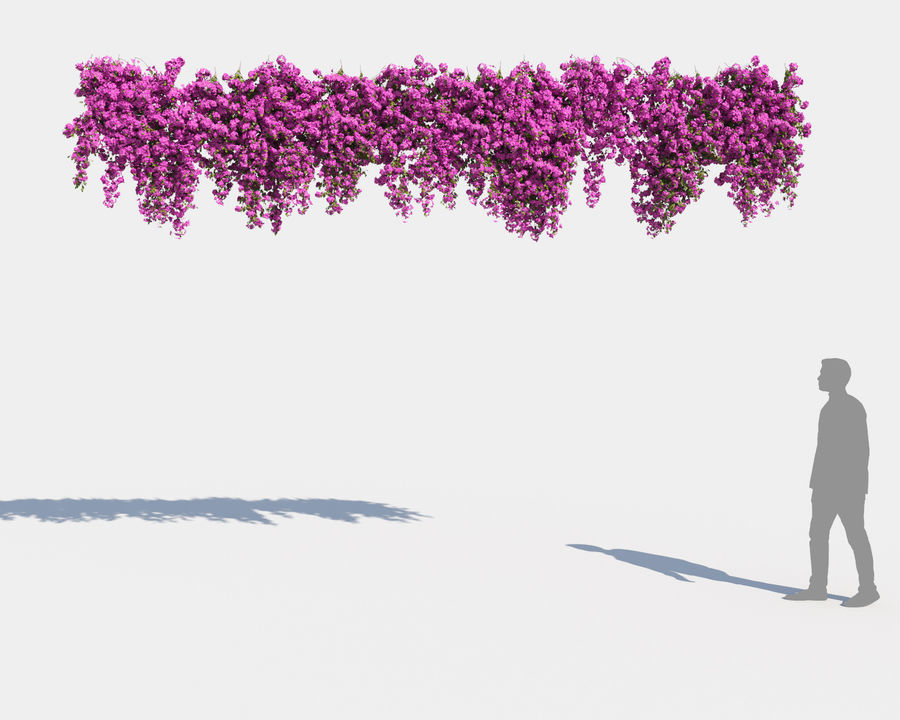 Climbing Bougainvillea Collection 2 (+GrowFX) royalty-free 3d model - Preview no. 6