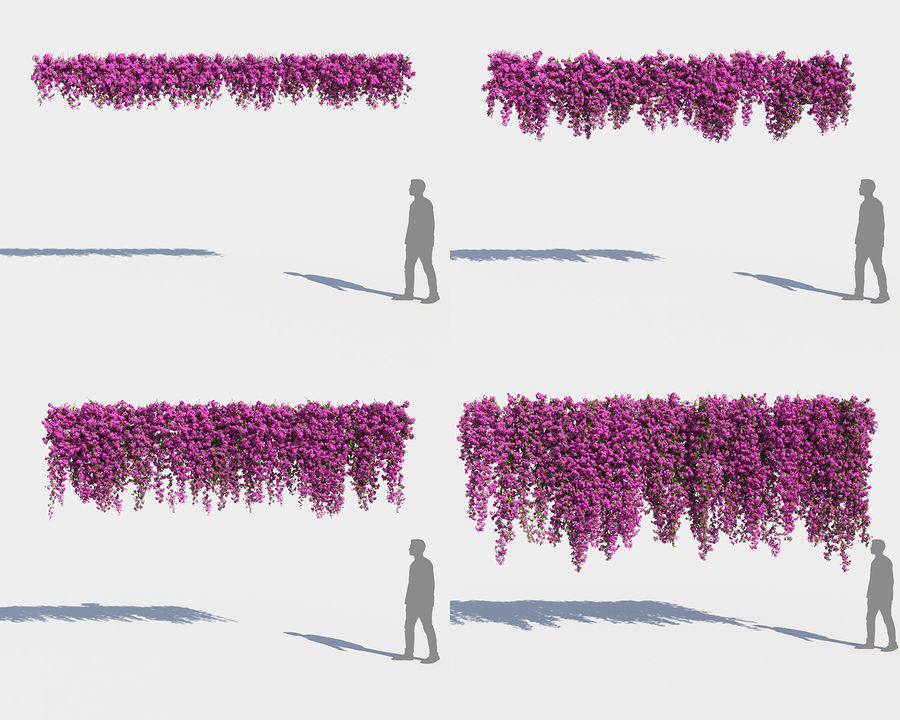 Climbing Bougainvillea Collection 2 (+GrowFX) royalty-free 3d model - Preview no. 2