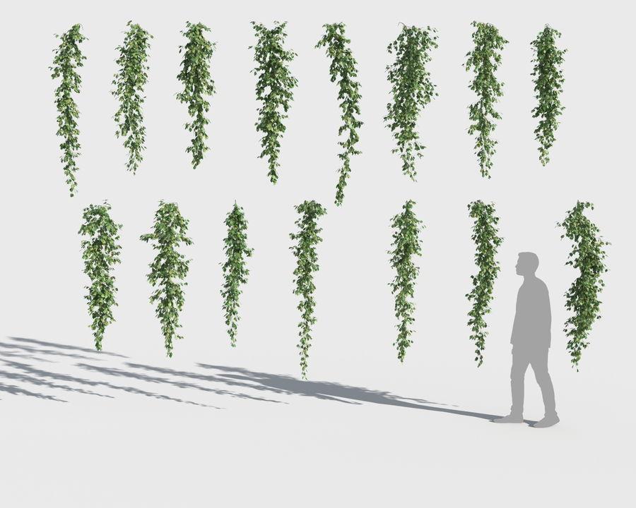 Colección de plantas trepadoras (+ GrowFX) royalty-free modelo 3d - Preview no. 9