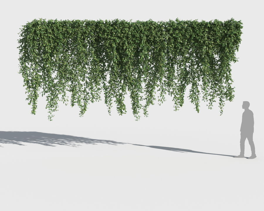 Climbing Plants Collection (+GrowFX) royalty-free 3d model - Preview no. 12