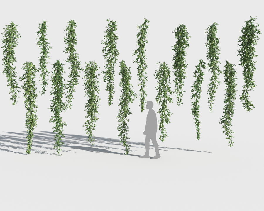 Climbing Plants Collection (+GrowFX) royalty-free 3d model - Preview no. 11