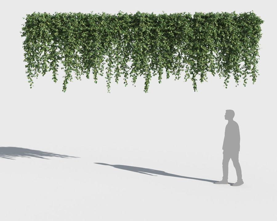 Коллекция вьющихся растений royalty-free 3d model - Preview no. 10