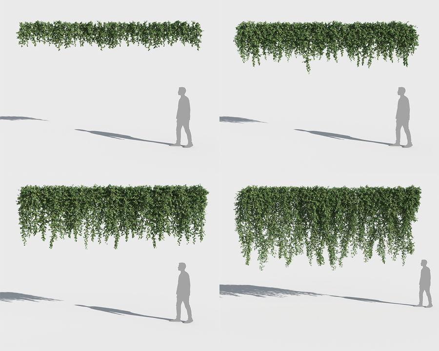 Colección de plantas trepadoras (+ GrowFX) royalty-free modelo 3d - Preview no. 2