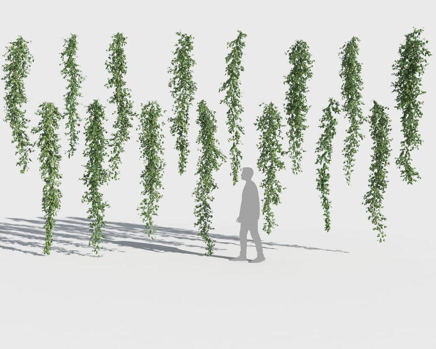 Коллекция вьющихся растений royalty-free 3d model - Preview no. 11