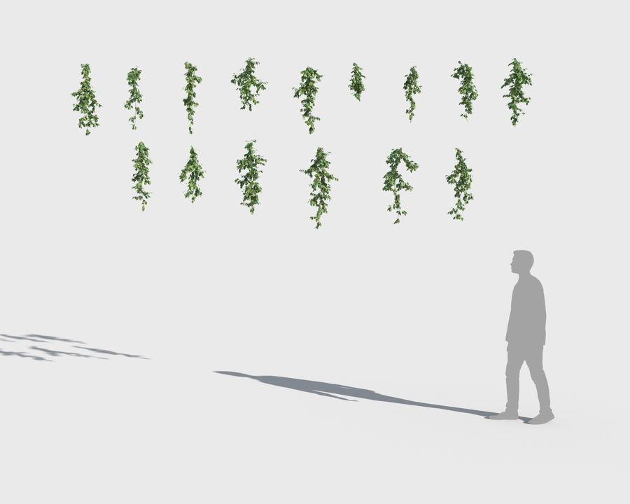 Colección de plantas trepadoras (+ GrowFX) royalty-free modelo 3d - Preview no. 5