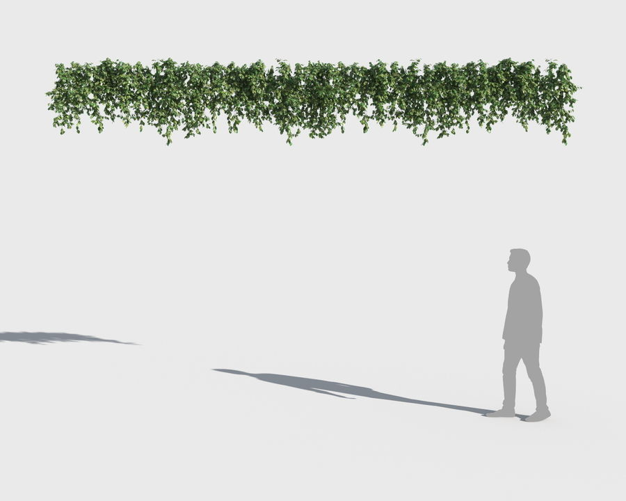 Colección de plantas trepadoras (+ GrowFX) royalty-free modelo 3d - Preview no. 6