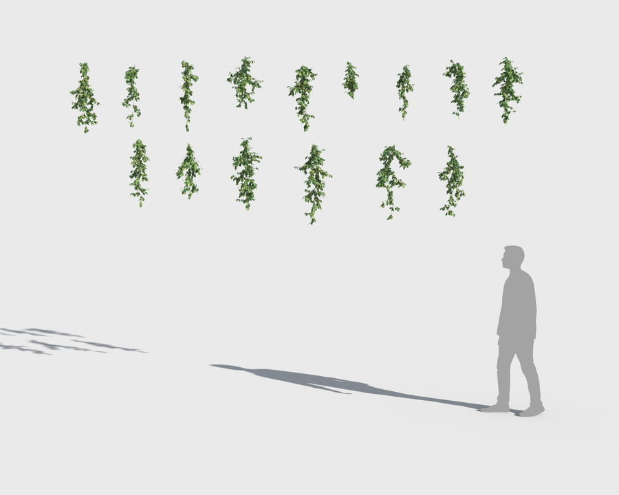 Climbing Plants Collection (+GrowFX) royalty-free 3d model - Preview no. 5