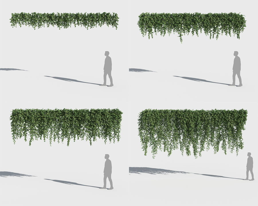 Climbing Plants Collection (+GrowFX) royalty-free 3d model - Preview no. 2