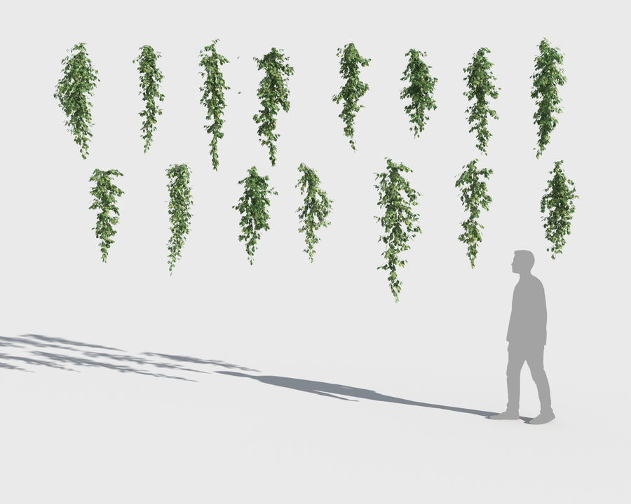 Climbing Plants Collection (+GrowFX) royalty-free 3d model - Preview no. 7